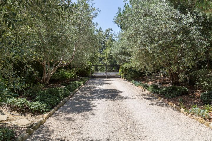 Olive tree lined driveway