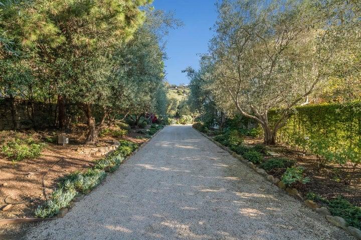 2060 Olive Trees