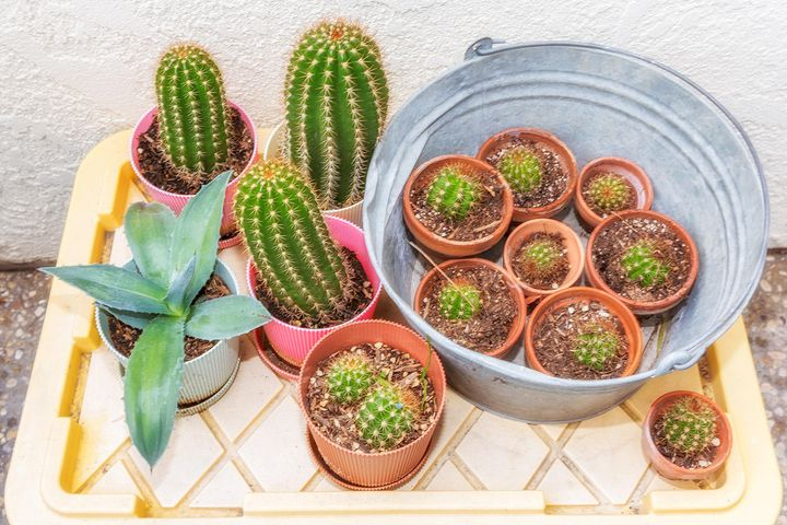 patio for gardening