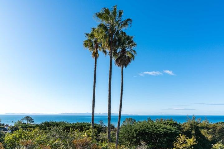 Palm Tree Horizontal6
