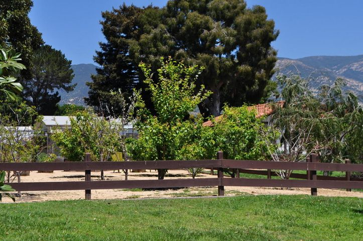 RSB Community Orchard