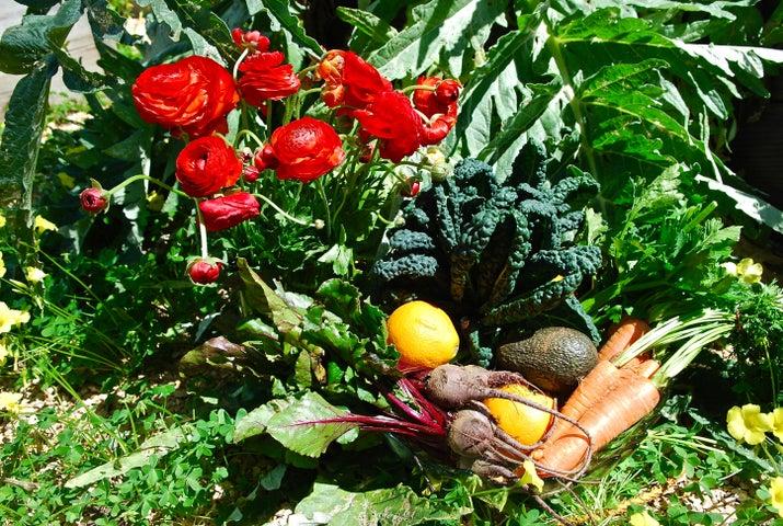 Bountiful produce, flowers, fruit trees