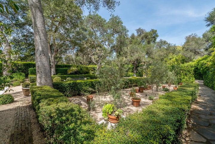 25 San Leandro olive trees