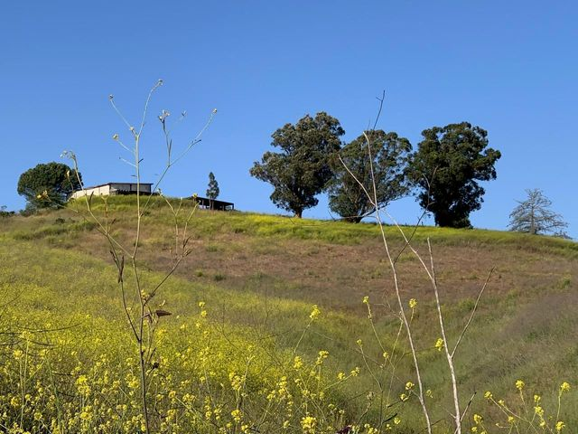 Rolling hillsides