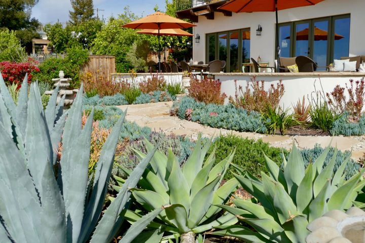 Agaves and Mature Plantings