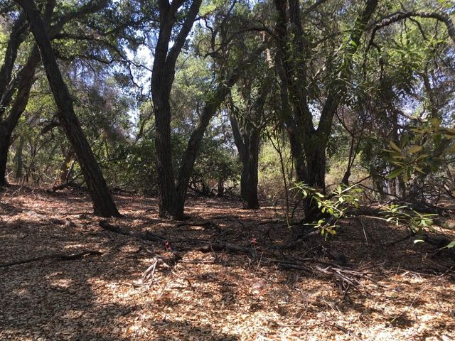 18 Hike down to a level oak forest