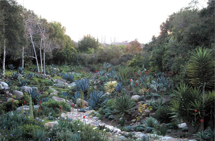 Aloes in bloom