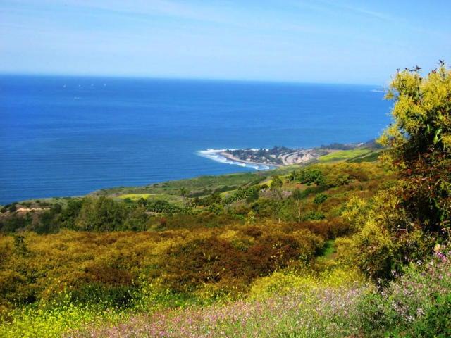 8516 Ocean View