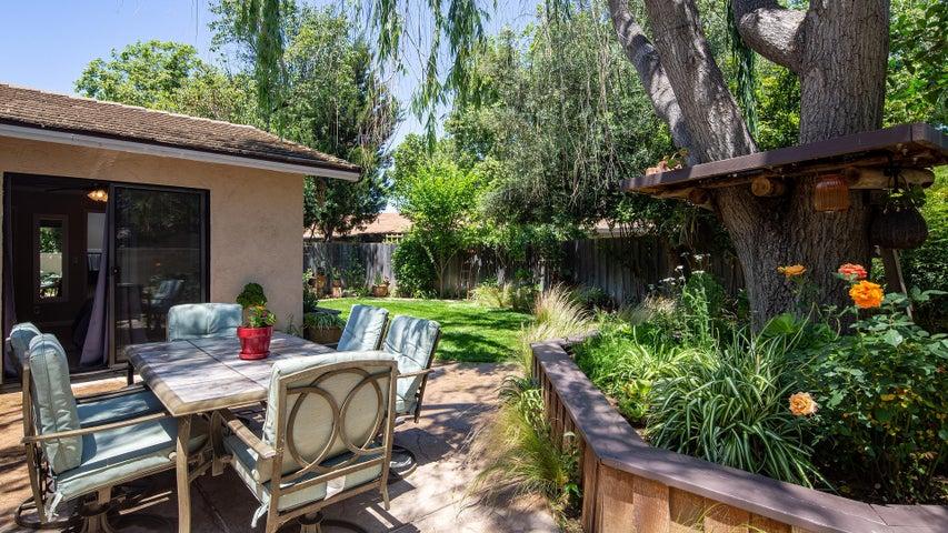 Backyard Patio and Tree Swing