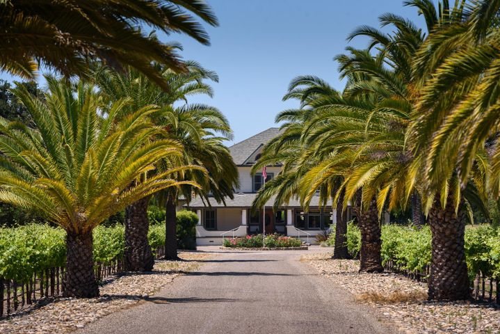 Palm lined driveway