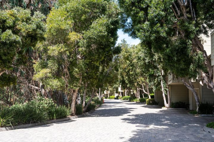 Eucalyptus Grove entry