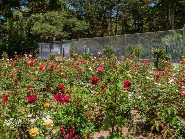 033_31-Rose Garden