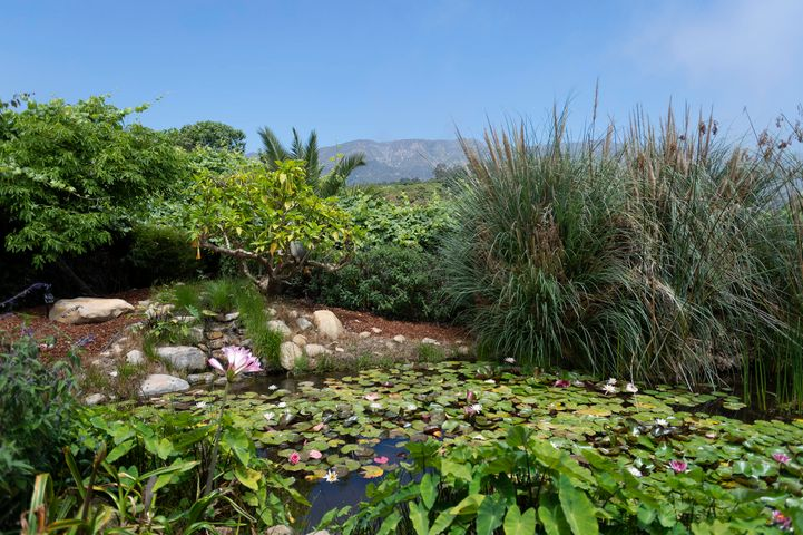Koi Pond and Mountain Views