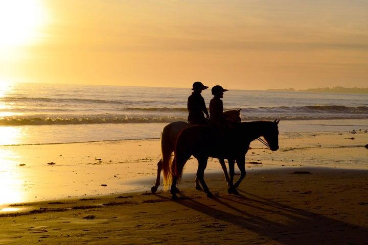 horses on beach bright