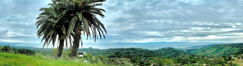 Panoramic Palms