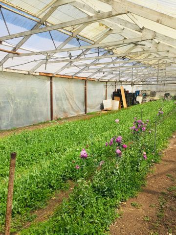 Greenhouse #3