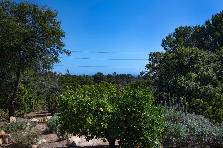 Fruit Trees - View