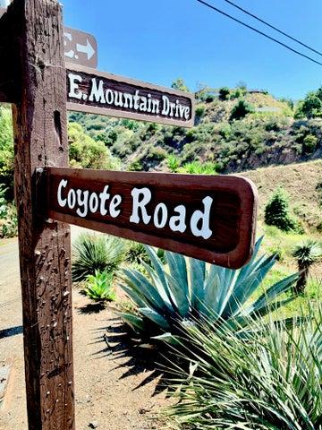 East Mountain Coyote