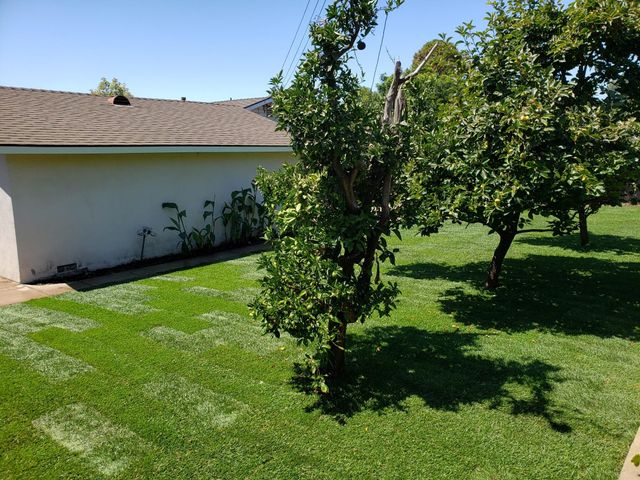 Lush Back Yard
