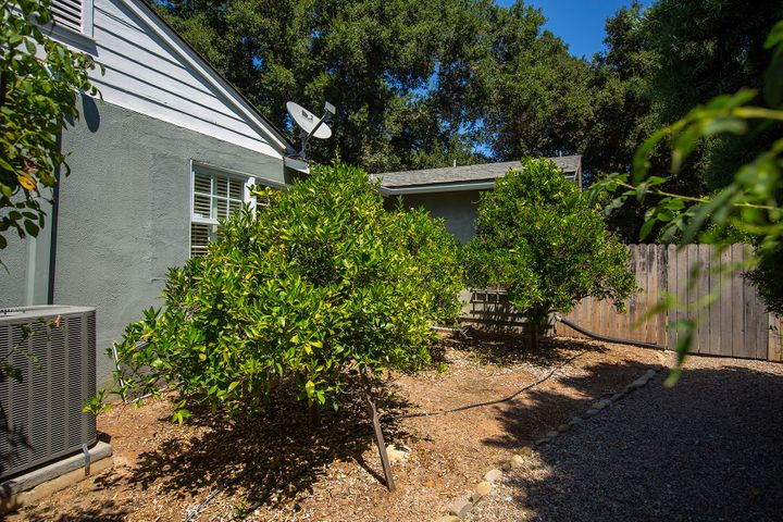 Citrus Trees on South side