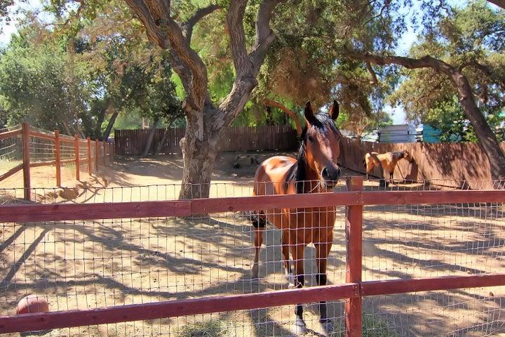 38. Horse corral