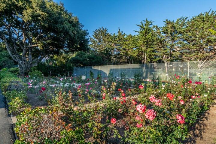 Community Rose Garden