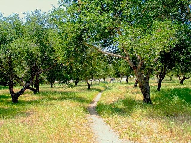 Trails & Oaks