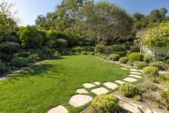 Verdant backyard