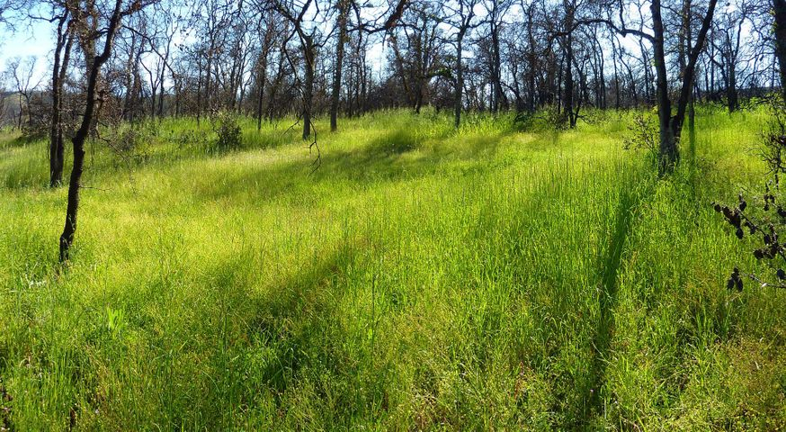 40 Acres Lot 131 Bigfoot Rd, Ono, CA 96047