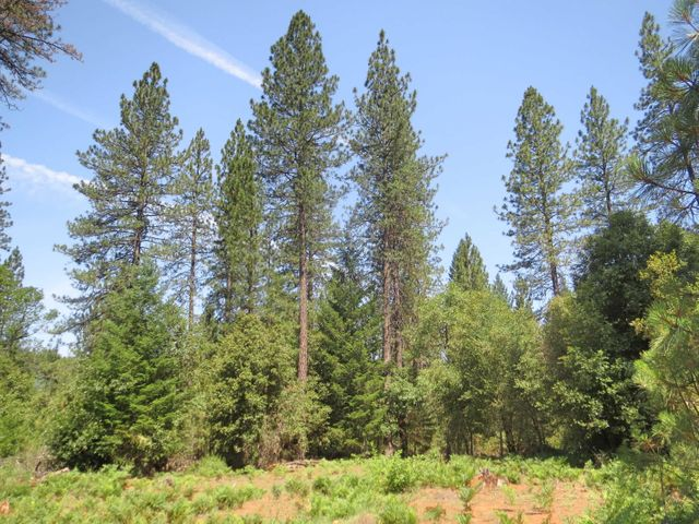 232 acres off Fenders Ferry Road, Lakehead, CA 96051