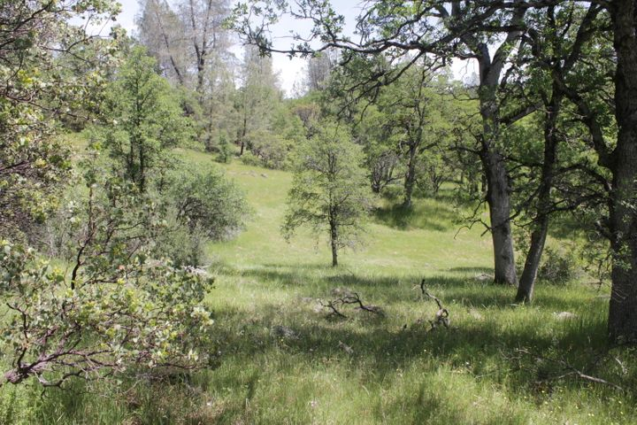 148 Acres Donkey Mine Road, Oak Run, CA 96069