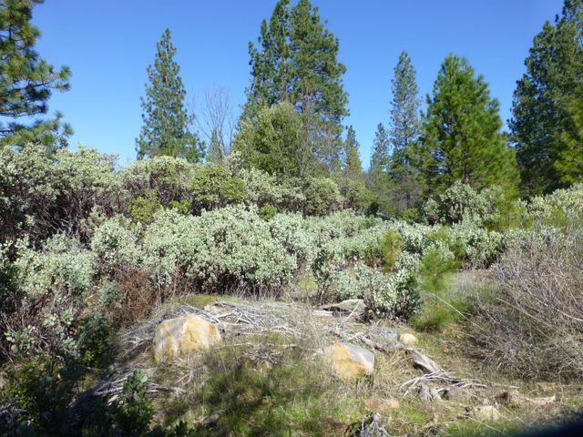 RL Smith Logging Rd, Oak Run, CA 96069
