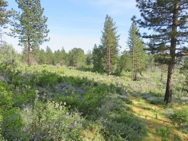 60 acres off Donkey Mine Road, Oak Run, CA 96069