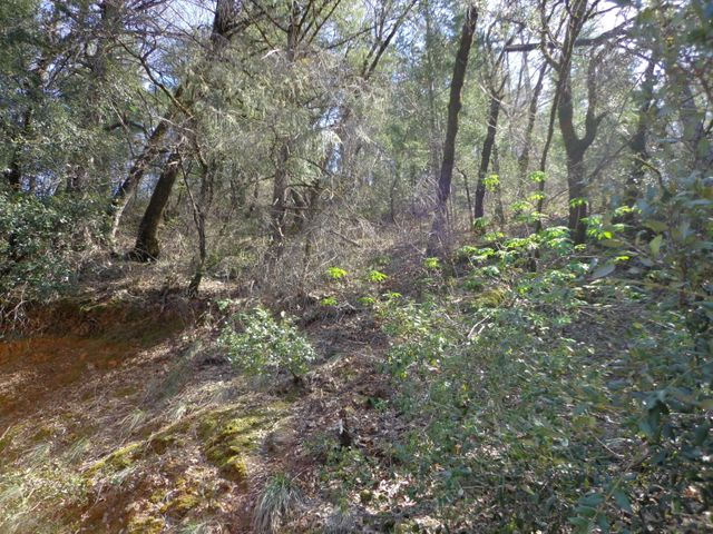 3.49 Acres Fawn Rd, Lakehead, CA 96051