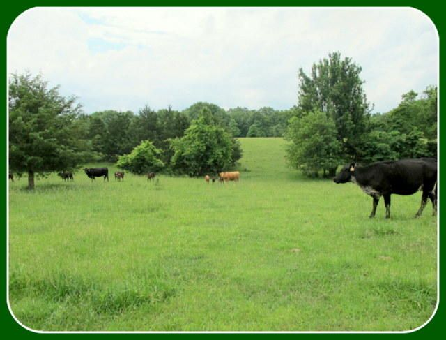 Tbd State Highway 14 Sparta, MO 65753