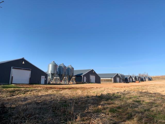 Farm for sale – 269  Madison 7635   Hindsville, AR