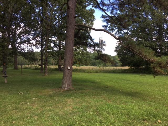 - Birch Tree