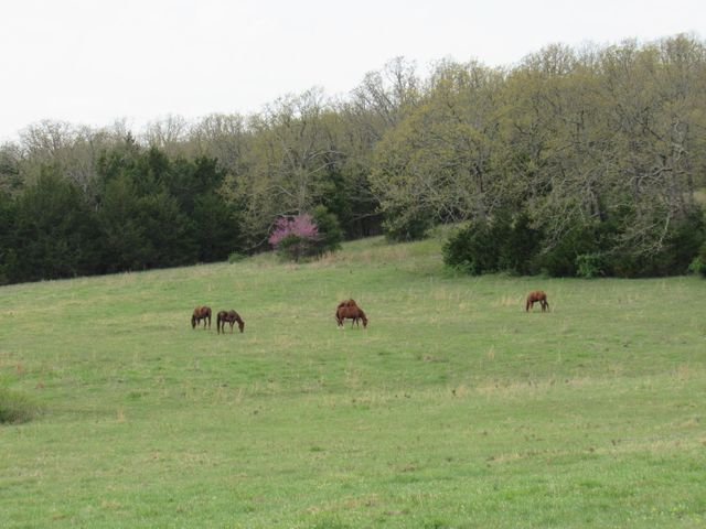Farm/Ranch/Land for sale –  Elkland,