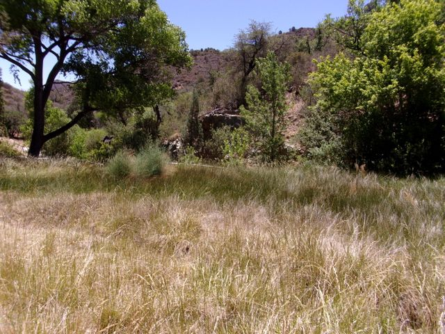 Cherry Creek Spring makes lush grass, & provides source of irrigation