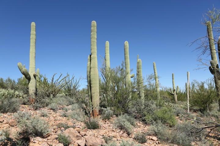 3256 W Sparkling Starr Drive, 42, Tucson, AZ 85713
