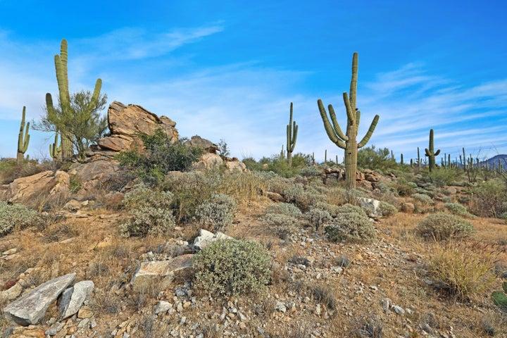 1795 W Tortoluta Mountain Circle, 501, Oro Valley, AZ 85755
