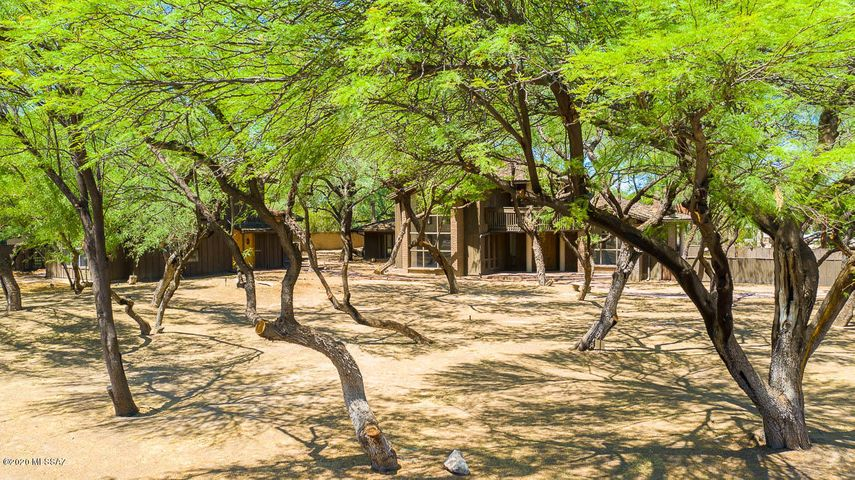 Prime Tucson Country Club location loaded w/ Mesquites