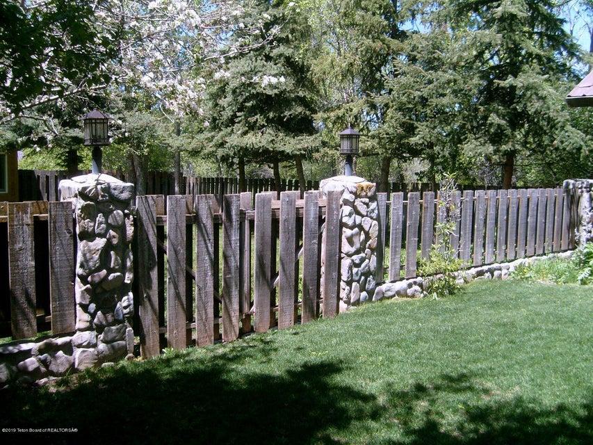 Lily Backyard