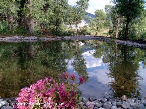 Lily Pond #2