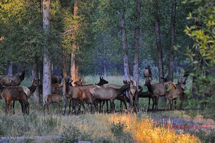 34 Fall Elk Herd