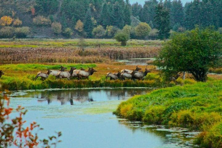 Elk near water