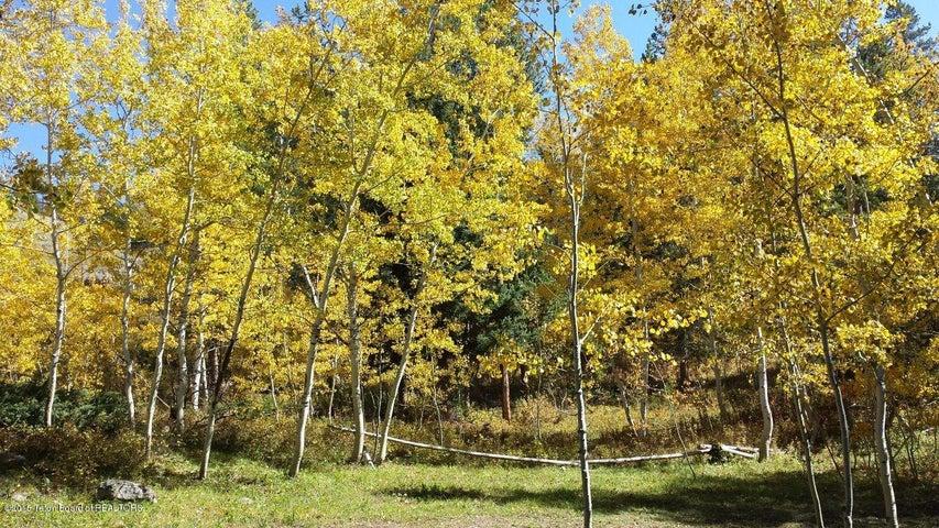 Aspen Trees on east side of property