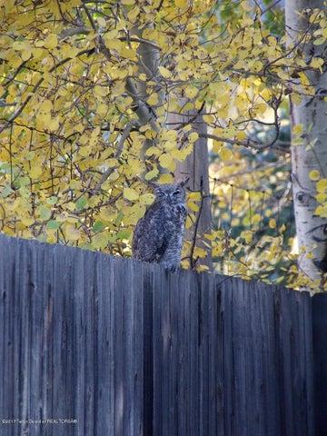 Owl on Fence