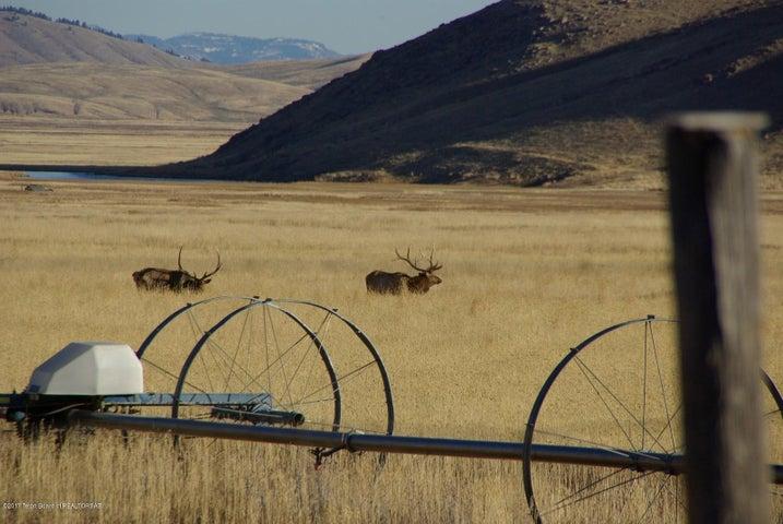 Elk on Reguge