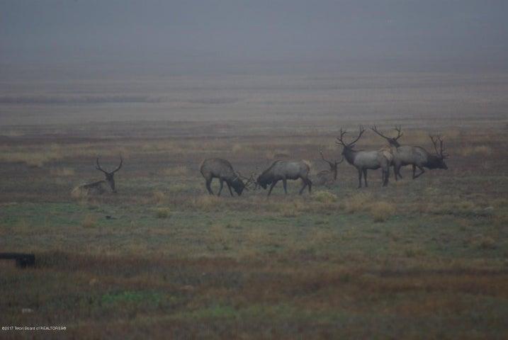 Elk on Refuge